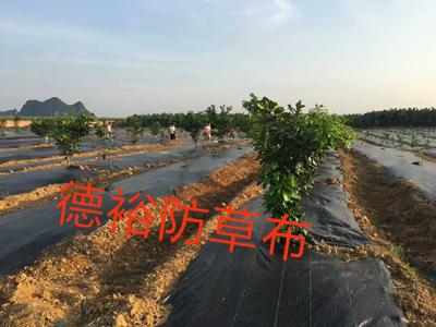 浙江省杭州市余杭区编织塑料膜