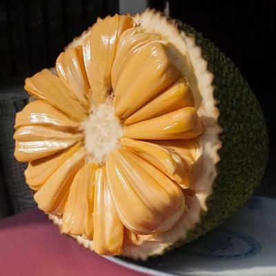 海南省三亚市崖州区海南菠萝蜜 15斤以上