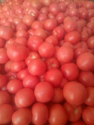 河南省安阳市安阳县金鹏西红柿 不打冷 硬粉 弧二以上