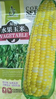 山东省潍坊市昌乐县玉米种子