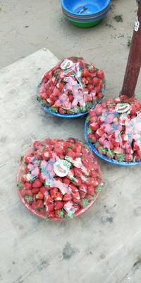河南省郑州市中牟县美国甜查理草莓 20克以上
