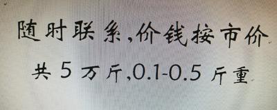 广东省江门市鹤山市池塘黄颡鱼 人工殖养 0.25-1公斤