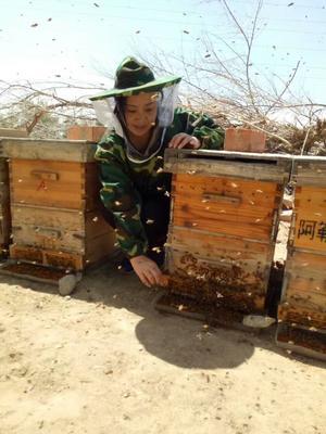 新疆维吾尔自治区阿勒泰地区阿勒泰市沙枣花粉 12-18个月