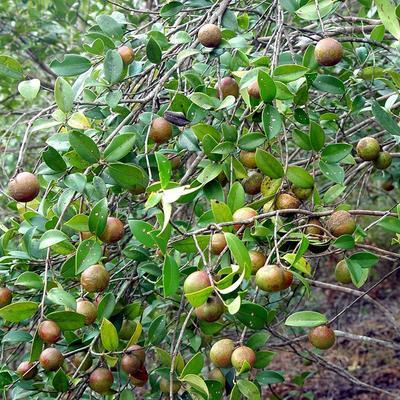 江西省赣州市南康区自榨纯菜籽油 2.5L以下