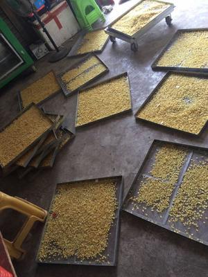 上海普陀区无硫皂角米