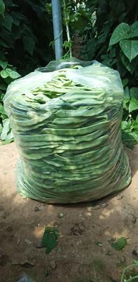 山东省济南市商河县扁青芸豆 1cm以上 10cm以上