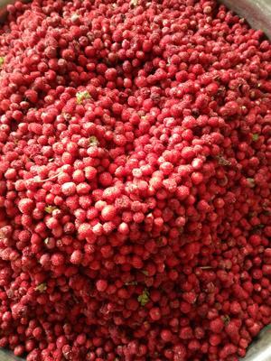 河南省周口市项城市蛇莓