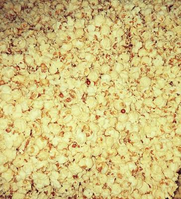 内蒙古自治区通辽市科尔沁区爆裂玉米 霉变≤1% 净货