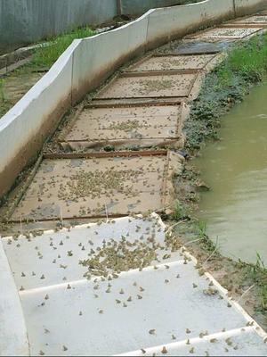四川省南充市高坪区青蛙