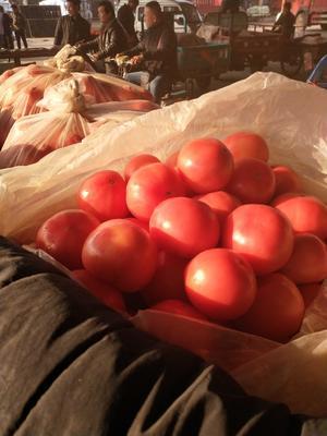河北省邯郸市永年县西贝西红柿 不打冷 硬粉 通货