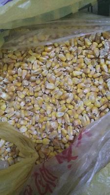 内蒙古自治区兴安盟科尔沁右翼前旗玉米干粮 霉变≤2% 净货