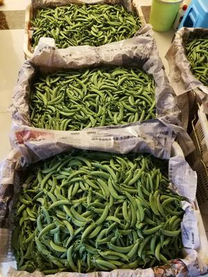 云南省昆明市呈贡区小青荚豌豆 5-7cm 未饱满