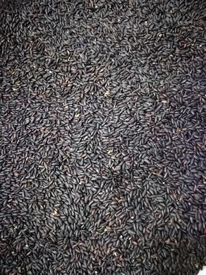 广东省佛山市南海区熟黑米现磨五谷杂粮