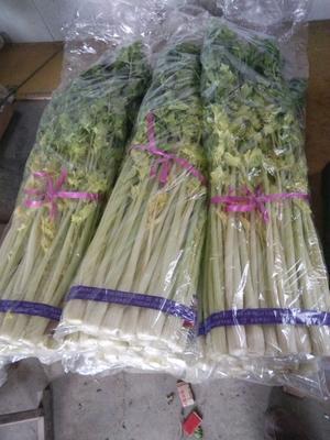 山东省青岛市平度市马家沟芹菜 50~55cm 露天种植 0.5斤以下