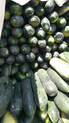 湖北省武汉市新洲区黑白冬瓜 15斤以上 黑皮