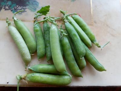山东省潍坊市高密市青豌豆 5-7cm 饱满