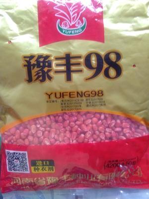河南省南阳市桐柏县玉米种子