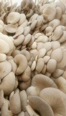 陕西省咸阳市长武县蘑菇