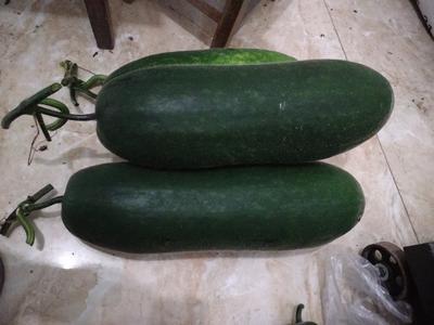 四川省乐山市市中区黑皮冬瓜 15斤以上 黑皮