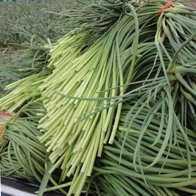 山东省青岛市平度市平度蒜苔 一茬 40~50cm 精品
