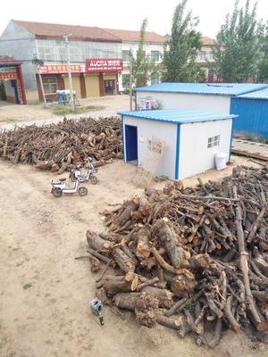 河南省开封市兰考县干杂木