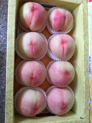 江苏省常州市武进区水蜜桃 55mm以上 4两以上