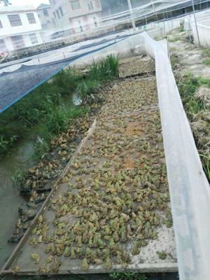 四川省泸州市合江县青蛙