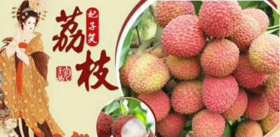 海南省海口市龙华区妃子笑荔枝 1.5cm