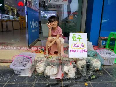 广西壮族自治区桂林市荔浦县月月兔 5斤以上