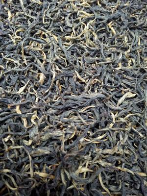 云南省普洱市思茅区古树红茶 散装 一级