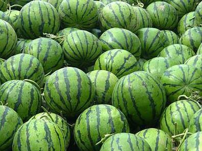 陕西省渭南市蒲城县京欣西瓜 有籽 1茬 8成熟 10斤打底