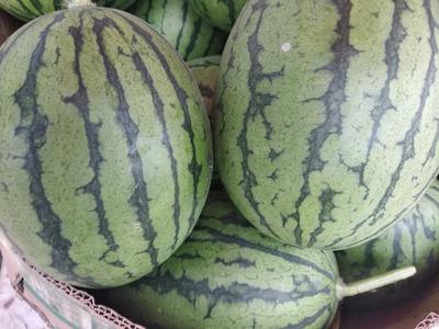这是一张关于吊西瓜 无籽 1茬 8成熟 2斤打底的产品图片