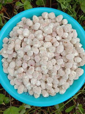 陕西省汉中市略阳县白雪草莓 20克以下