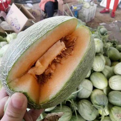 山东省聊城市莘县西州蜜瓜 2斤以上