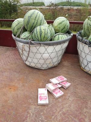 安徽省蚌埠市怀远县8424西瓜 无籽 1茬 8成熟 5斤打底