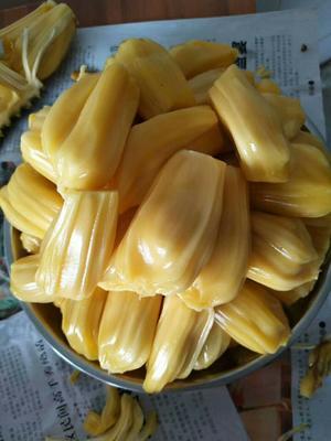 广西壮族自治区玉林市博白县海南菠萝蜜 10-15斤