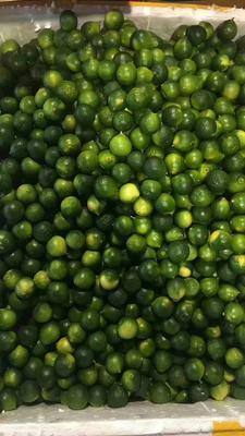 这是一张关于小青果 2 - 2.5cm 1两以下的产品图片