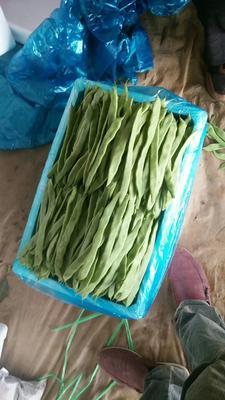 这是一张关于芸豆 15cm以上 打冷的产品图片