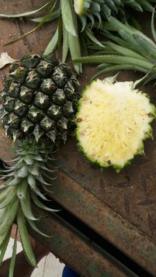 """广东省湛江市徐闻县""""菲律宾""""(巴厘)菠萝 1.5 - 2斤"""
