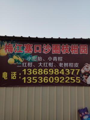 这是一张关于新会柑 5 - 5.5cm 1.5 - 2两的产品图片