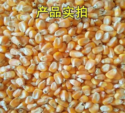 辽宁省大连市普兰店市玉米干粮 霉变≤1% 杂质很少