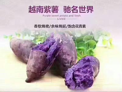 广西壮族自治区崇左市龙州县越南紫薯 2两以下