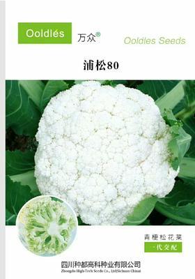 河南省郑州市惠济区松花菜种子 一级良种