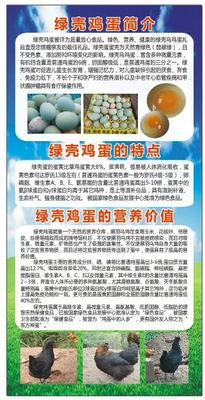 四川省内江市资中县绿壳鸡蛋 食用 礼盒装