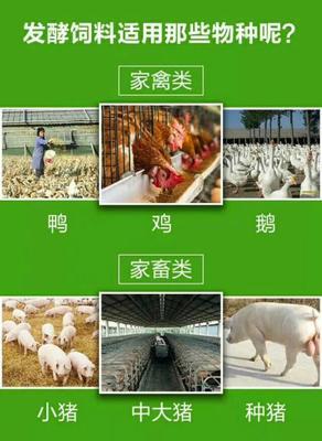 上海闵行区发酵剂