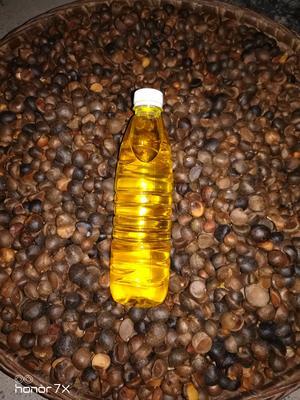 广西壮族自治区河池市凤山县有机山茶油 500ml