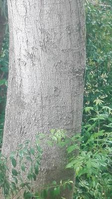 四川省绵阳市江油市皂角树