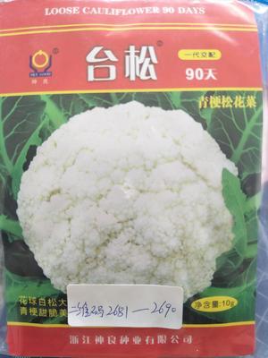 河南省郑州市惠济区白面青梗松花菜种子 原种