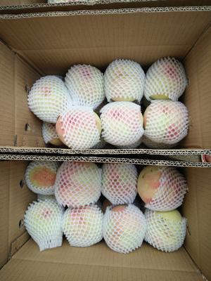 广东省惠州市惠阳区红桃 65mm以上 4-5两