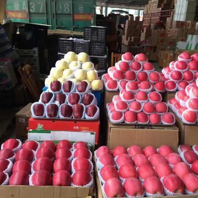 甘肃省平凉市庄浪县红富士苹果 纸袋 片红 65mm以上